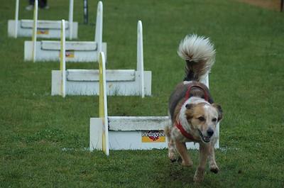 Albury Non Croydon Dogs4