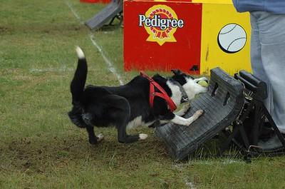 Albury Non Croydon Dogs34