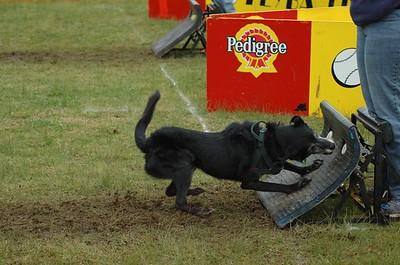 Albury Non Croydon Dogs49