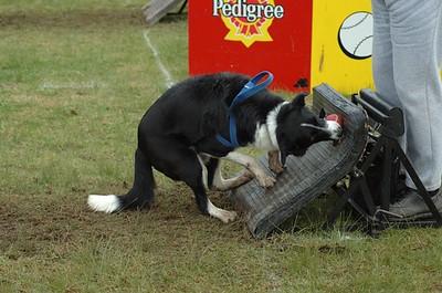 Albury Non Croydon Dogs48