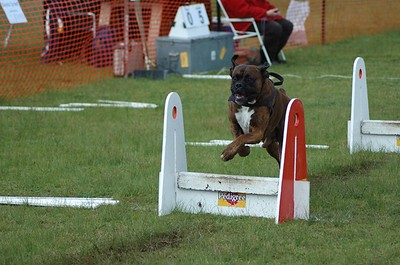 Albury Non Croydon Dogs28