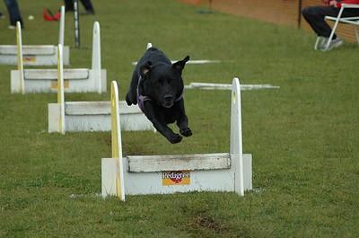 Albury Non Croydon Dogs17
