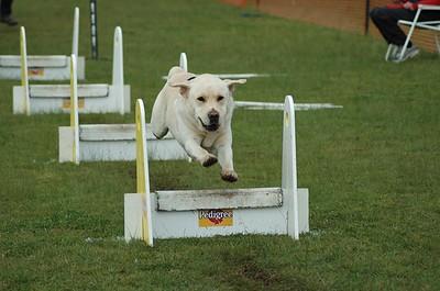 Albury Non Croydon Dogs14