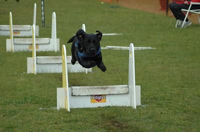 Albury Non Croydon Dogs13