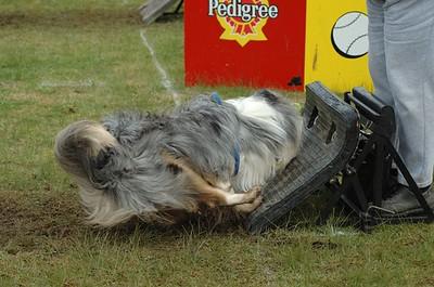 Albury Non Croydon Dogs47