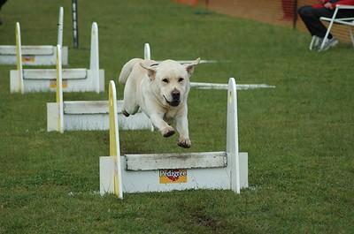 Albury Non Croydon Dogs11
