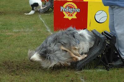 Albury Non Croydon Dogs32