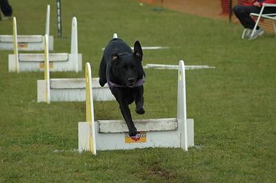 Albury Non Croydon Dogs12