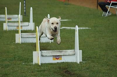 Albury Non Croydon Dogs15