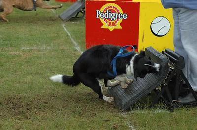 Albury Non Croydon Dogs33