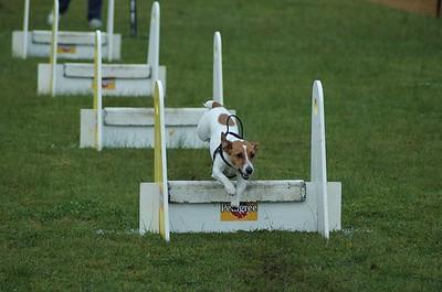 Albury Non Croydon Dogs5