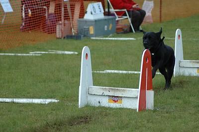 Albury Non Croydon Dogs29