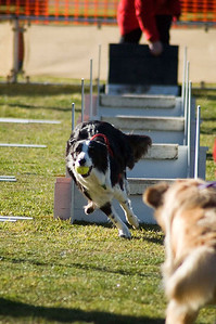C:\Documents and Settings\Paul\My Documents\My Pictures\Flyball\Flyball Geelong August 2006\JPEG\DSC_7026
