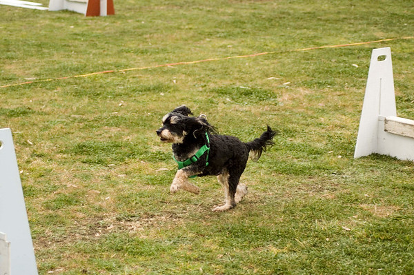 Flyball, Geelong, Aug. 2006 (Part 4)