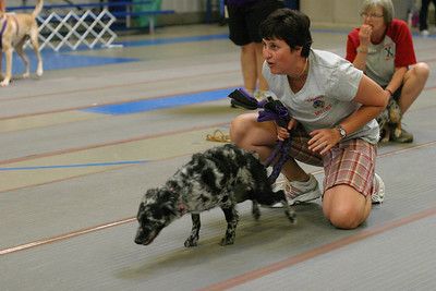 Just Flyball 2009 tournament
