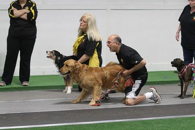 Flyball Grand Prix 2011