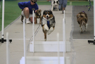 Seekonk 2013 Flyball Grand Prix