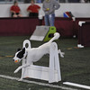 Flyball : 6 galleries with 694 photos