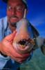 a mouth full of teeth- trigerfish, seychelles.