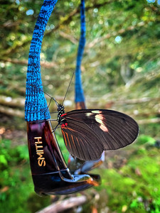 Butterfly on Smith Sunglasses