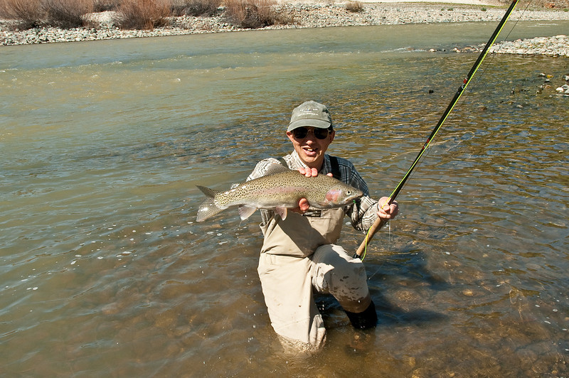 A large rainbow trout from the Yuba during spring runoff