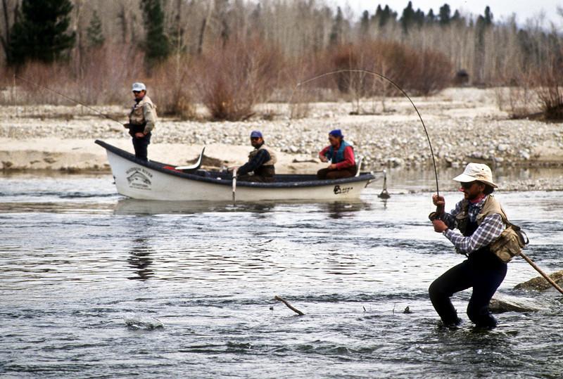Bitterroot river skwala hatch, Montana