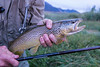 a nice brown trout landed with a 12' Tenkara rod, no reel