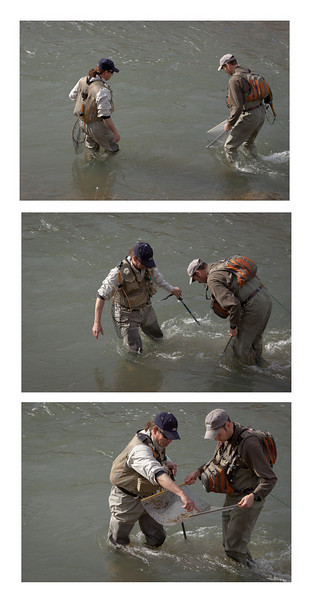 Triptych of Flyfishers Seining for Aquatic Insects, Lower Yuba River CA