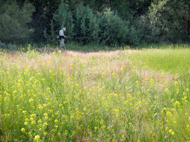 Gary Walking Toward Ruby Creek, Surrounded by Wildflowers