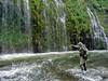 High-Sticking the Upper Sacramento River at Mossbrae Falls, Dunsmuir CA