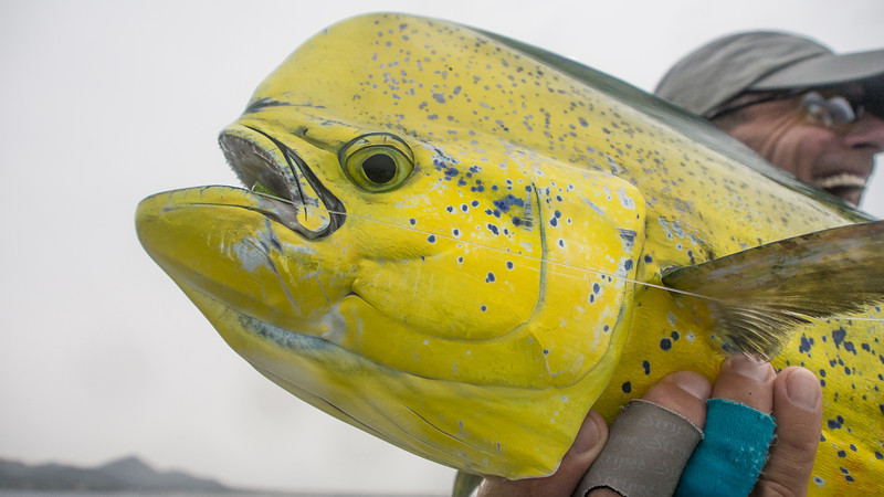 Happy Angler, Sad Dorado, Baja MX