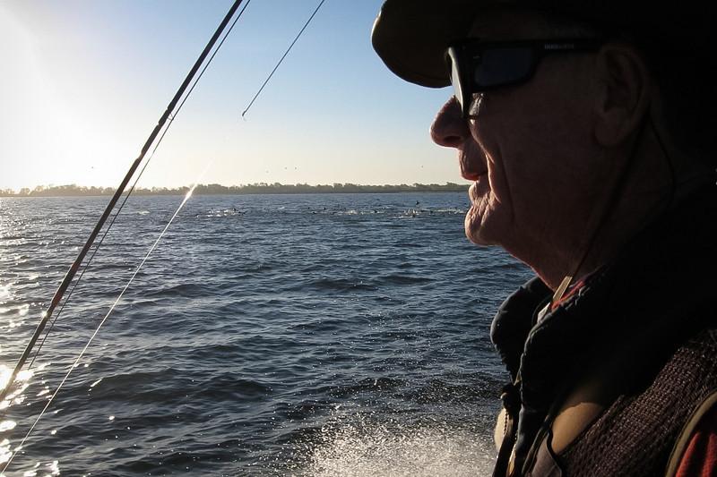 Observing, California Delta