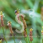 Peek-a-boo Bee