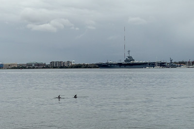 Dolphins in the harbor
