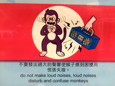 Not just the monkeys... !