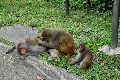 Kam Shan Country Park