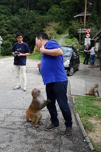 Feeding the monkeys...