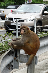 Traffic Watch