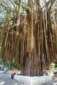 Tree by Puerta De San Juan