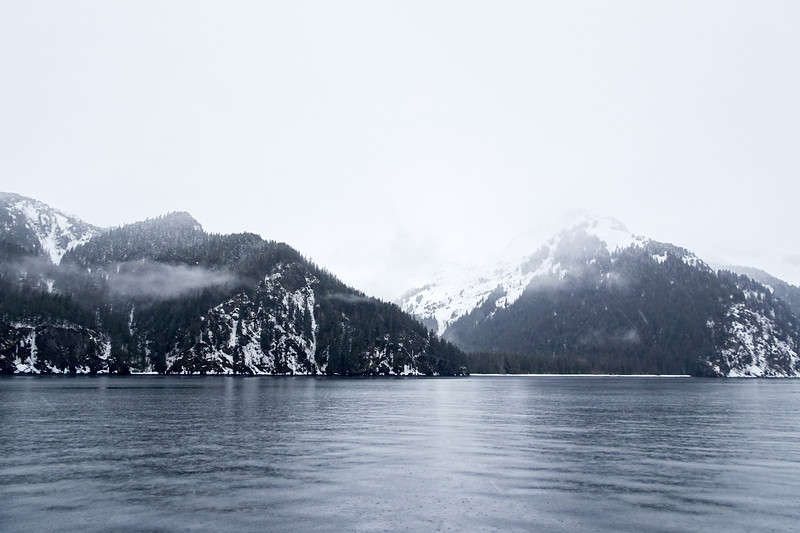 Seward Whale Watching Cruise