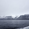 Seward Whale Watching Cruise
