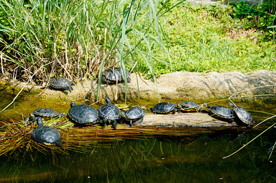 Turtles of Lemur Island