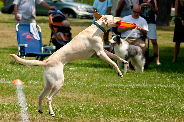 Flying Disc Dogs 7/07/2012