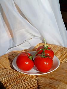 Fo. Tomato Ripe 04