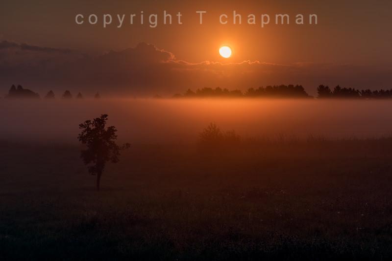 Sunrise Fog II