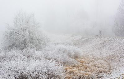 Dog Walk on a Frosty Morning