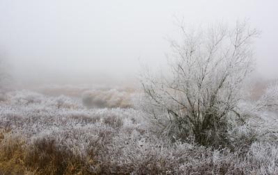 Creekside Frost