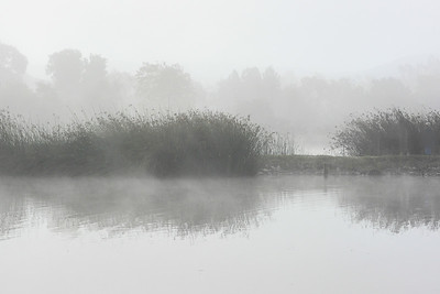 Foggy Morning At San Joaquin Marsh