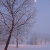 Moonlight on Leaning Tree