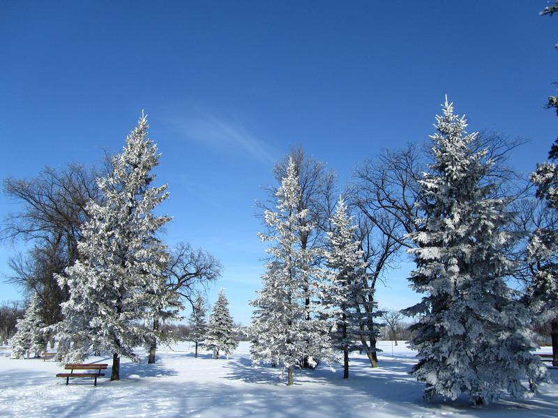 The Morning After - Evergreens Landscape